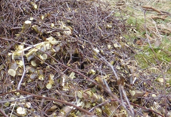 Wood Waste Recycling | Diamond Mulch, Indianola Allegheny County PA