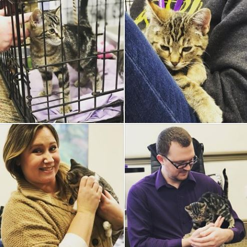 cat adoption event at ssb bank pittsburgh